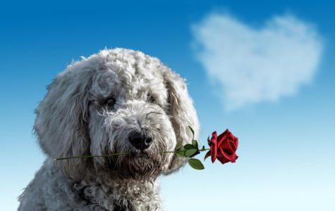 The Worst Valentine's Day