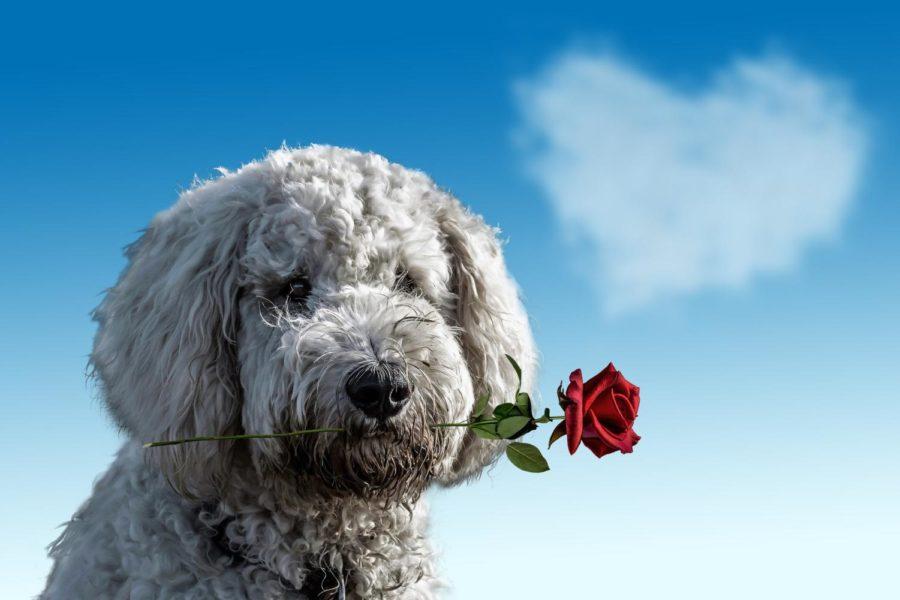 The+Worst+Valentine%27s+Day